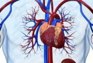 Ce înseamnă să ai inima mărită
