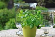 Cele mai BUNE tratamente naturiste împotriva arsurilor la stomac