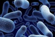 La ce ne expunem dacă luăm greșit antibiotice. A apărut super-bacteria