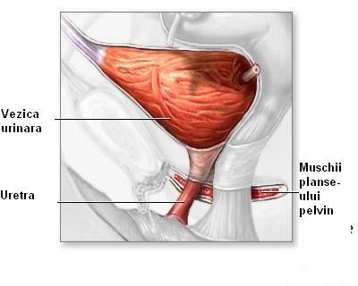 analiza sange sarcina