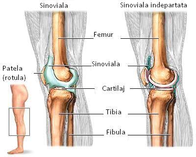 limitarea flexiunii articulației cotului cu durere bolesti hrudní páteře a mezi lopatkami