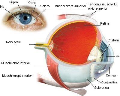 Alergii oculare - Conjunctivita alergica