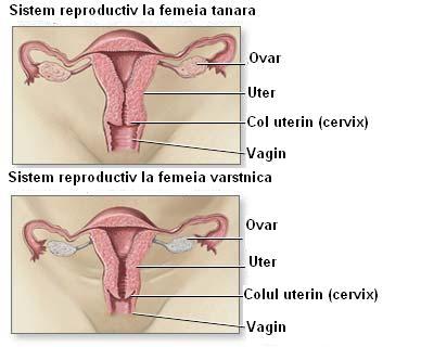 Ciclu neregulat: Dereglare hormonala sau premenopauza? - menopauza.bucovinart.ro