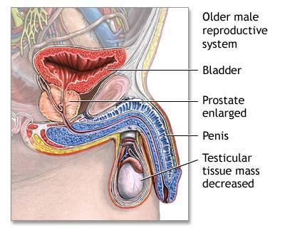 Prostatan 60 cps – Darmaplant