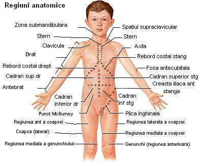 Regiuni anatomice (vedere anterioara) - pentru localizarea precisa a durerii