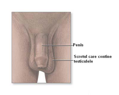 Afectiuni ale aparatului genital masculin
