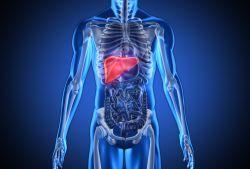 Mentinerea ficatului sanatos in lupta cu hepatita C