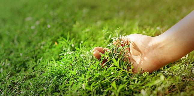 Terapie naturala vara, pentru imunitate buna toamna si iarna