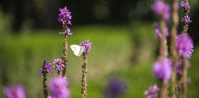 Secom a finalizat amenajarea sectorului de plante medicinale si utile din Gradina Botanica
