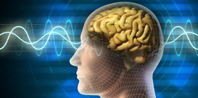 zona creierului de viziune