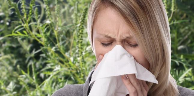 Alergia la ambrozie, confundata cu viroza. Ce trebuie neaparat sa stii