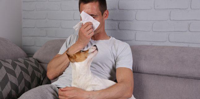 Alergiile cauzate de animalele de companie