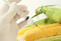 Ar trebui sa evitati sau nu organismele modificate genetic?