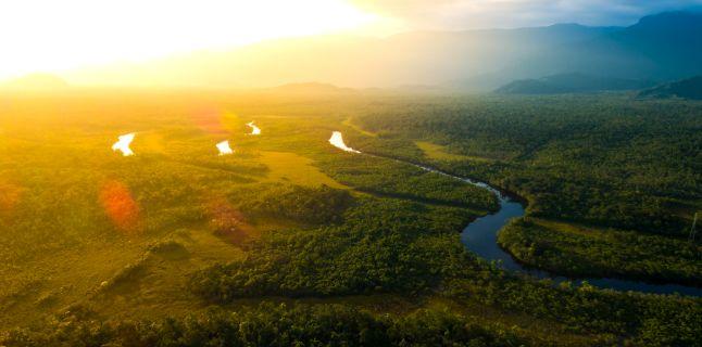 Lupta impotriva cancerului – reteta din 6 plante din Padurea Amazoniana pe care localnicii le folosesc de mii de ani