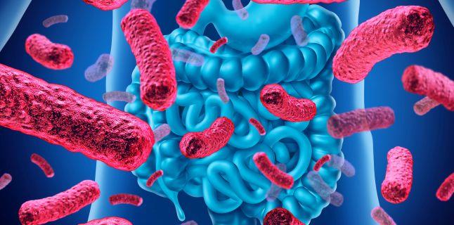 pierdere în greutate bacterii intestinale cea mai bună intervenție chirurgicală de pierdere în greutate