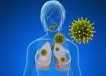 human papillomavirus or hpv family