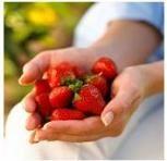 Capsunile: surse naturale de antioxidanti
