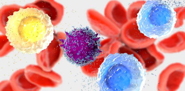 Ce sunt neutrofilele si care este rolul lor?