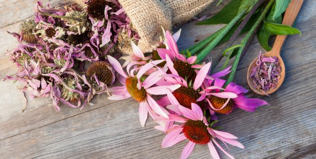 Echinaceea - beneficii pentru sanatate