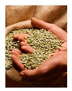 Extractul din boabe de cafea crude, o solutie posibila de reglare a glicemiei