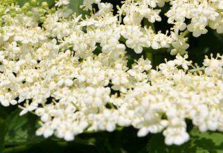 Plante medicinale pentru ingrijirea parului