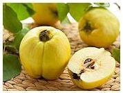 Beneficiile pentru sanatate ale gutuilor
