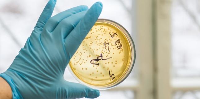 Cat de periculoase pot fi infectiile cu streptococi?