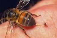Intepatura de viespi/albine la copii