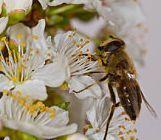 Ingrijiri in cazul intepaturilor de insecte