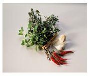 Plante cu proprietati antibacteriene