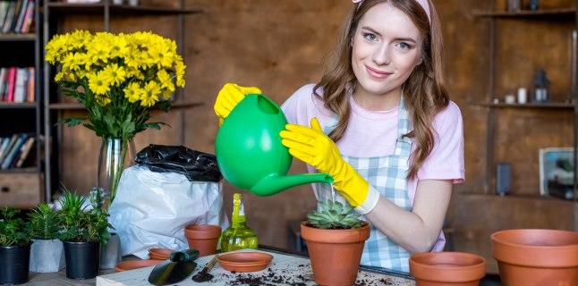 Efectul plantelor de apartament asupra sanatatii