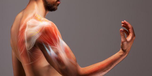 Principalele functii ale sistemului muscular