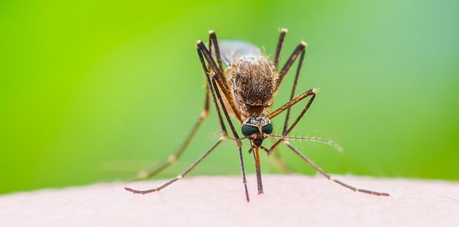 Informare referitoare la infectia cu virus West Nile