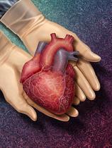 Informatii esentiale despre transplantul de organe