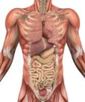 Organele corpului uman si transplantul de organe