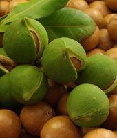 Uleiul de macadamia: beneficii oferite pielii